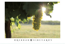 'Viognier Vineyard' Art Print Image